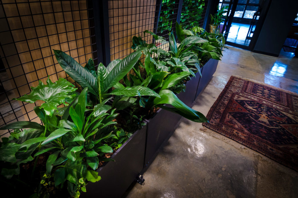 Custom planters - Plant Accessories - Office interiors- Living Green Walls