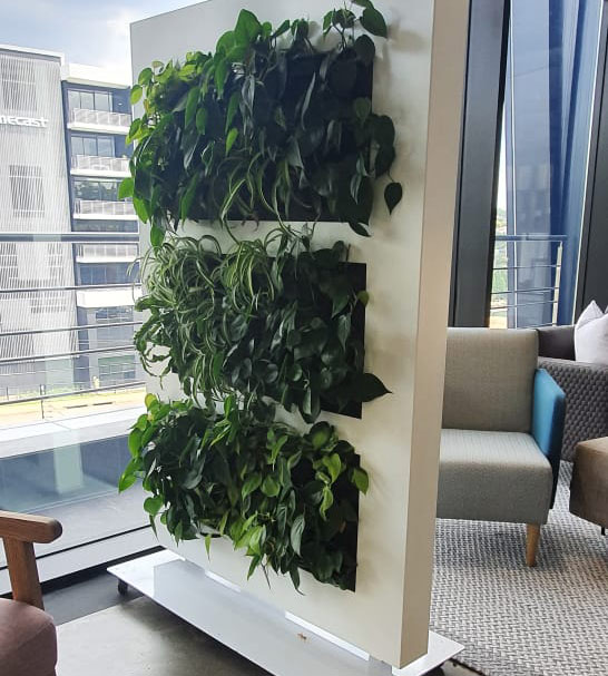 Free standing office dividers - living green walls