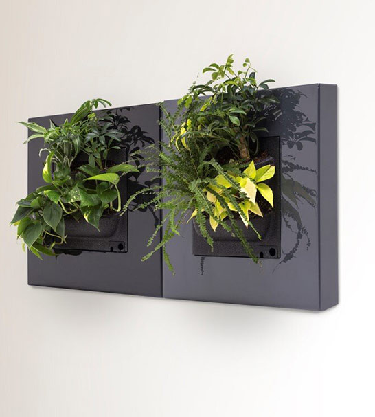 Living Plant picture - living green walls