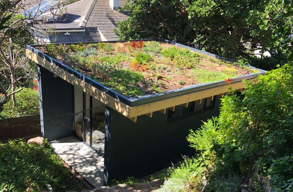 Rooftop garden - Living Green Walls