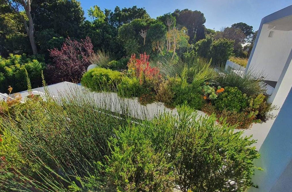 Rooftop garden installed in Wynberg, Cape Town - Living Green Walls